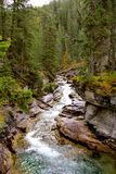 Walddurchlauf Lizenzfreies Stockbild