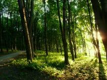 Waldeklipse Lizenzfreie Stockbilder