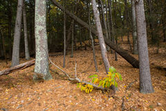 Walden Pond forest Stock Photography