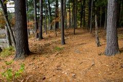 Walden Pond forest Stock Photos
