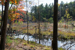 Walden Pond forest Royalty Free Stock Photography