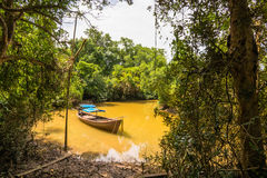 Walderhaltung und -tourist Tha Pom Klong Song Nam Mangrove Stockbilder
