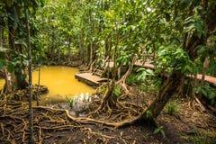 Walderhaltung und -tourist Tha Pom Klong Song Nam Mangrove Lizenzfreie Stockfotos