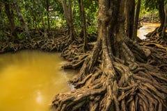 Walderhaltung und -tourist Tha Pom Klong Song Nam Mangrove Lizenzfreie Stockbilder