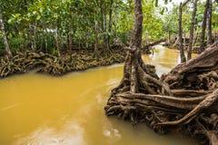 Walderhaltung und -tourist Tha Pom Klong Song Nam Mangrove Stockfotografie