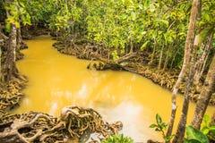 Walderhaltung und -tourist Tha Pom Klong Song Nam Mangrove Stockbild
