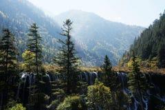Waldfälle Stockfotos