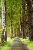 Waldfahrradpfad Stockbilder
