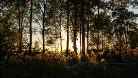 Waldfenster Lizenzfreie Stockbilder