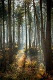 Waldflecken Stockbild