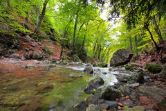 Waldfluß Stockbild