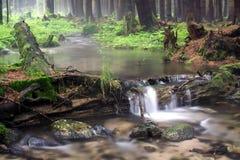 Waldfluß Stockfotos