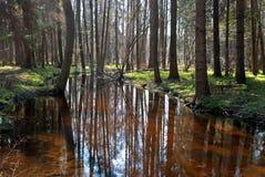 Waldfluß Stockfotografie
