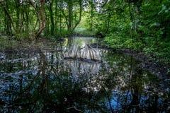 Waldfluß, der den Himmel reflektiert Lizenzfreie Stockfotos