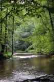 Waldfluß im Vorfrühling Stockfotografie