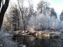 Waldfluß im Winter stockfoto