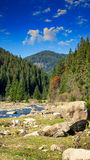 Waldfluß mit Steinen und Moos Lizenzfreie Stockfotos