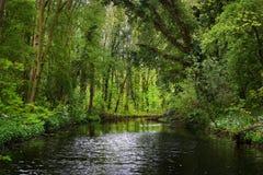 Waldfluß in Stochemhoeve-Park Lizenzfreie Stockfotografie