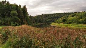 Waldfluss- und -herbstbäume Stockbild