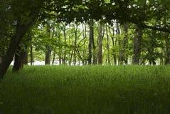 Waldfluss-Wald auf James River Lizenzfreie Stockfotos