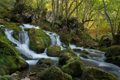 Waldfrühling Stockbild