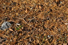 Waldfußboden Lizenzfreie Stockfotos