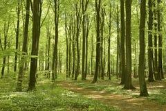 Waldfußweg im Frühjahr Stockbilder