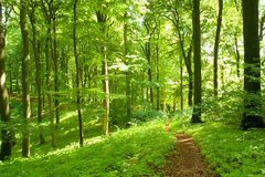 Waldfußweg Stockbilder