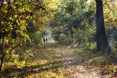 Waldgehen stockfoto