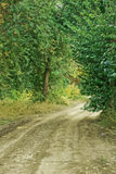 Waldgehender Pfad lizenzfreies stockfoto