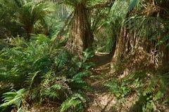 Waldgehender Weg Stockbilder