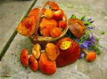 Waldgeschenkpilze in einem Korb und in einem Blumenstrauß von wilden Blumen stockfotos