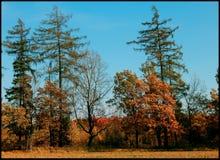 Waldgeschichten Stockbild