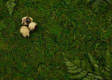 Waldgrünhintergrund mit Wachteleiern lizenzfreie stockbilder