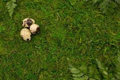 Waldgrünhintergrund mit Wachteleiern stockfoto