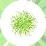 Waldgrasgrünblätter lizenzfreie abbildung