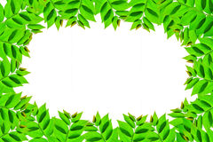 Waldgrasgrünblätter stockbild