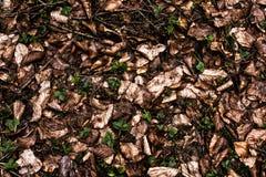 Waldgrundbeschaffenheit Stockbild