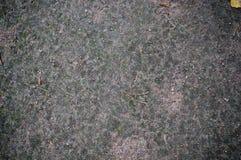Waldgrundbeschaffenheit mit Moos Hintergrund stockbild