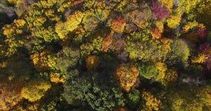 Waldherbstlandschaft von Bäumen und von Teich am sonnigen Tag stock video footage