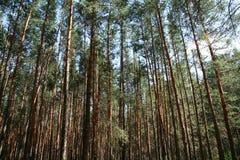 Waldhintergrund Lizenzfreies Stockbild