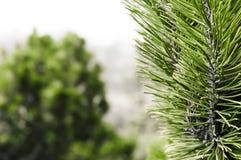 Waldhintergrund mit Nadelbaum stockfoto