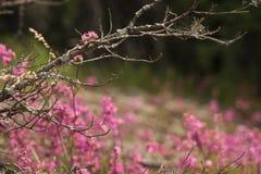 Waldholzlandschaft Stockfotografie