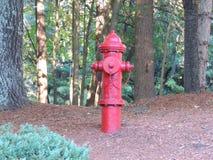 Waldhydrant Stockbilder