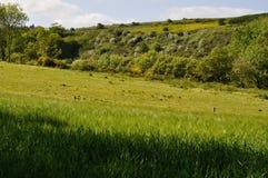 Waldige Hecke der Wiese des grünen Grases stockfotografie