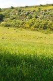 Waldige Hecke der Wiese des gr?nen Grases lizenzfreie stockbilder