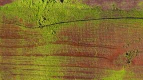 Waldiger Hintergrund des alten Mooses Stockfoto