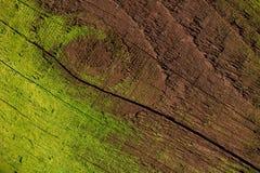 Waldiger Hintergrund des alten Mooses Stockbilder