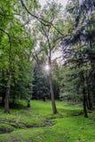 Waldjagdrevier im Dorf von Velke-mezirici in Lizenzfreie Stockfotos