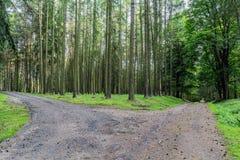 Waldjagdrevier im Dorf von Velke-mezirici in Lizenzfreie Stockbilder